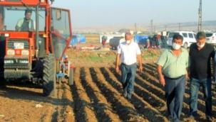 Korana patlayınca satışlar 3-4 kat arttı! Çiftçi her karış toprağına sarımsak ekiyor