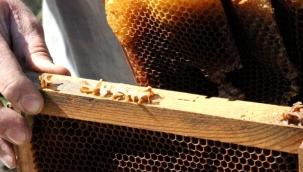 Aydın'da esrarengiz olay! Arılar, Arapça yazılar yazıp kovanlarını terk ediyor