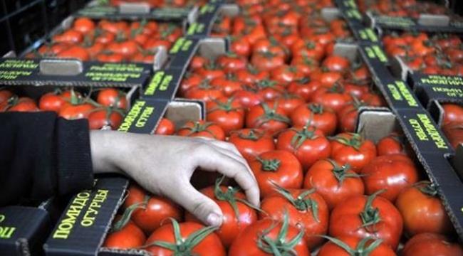 Rusya'nın 50 bin tonluk ek domates kotası üreticiyi sevindirdi