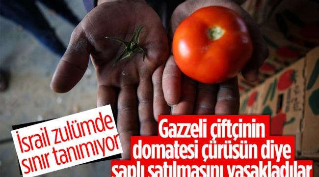 İsrail'den Gazzeli çiftçi ve tüccarlara 'sapsız domates' baskısı