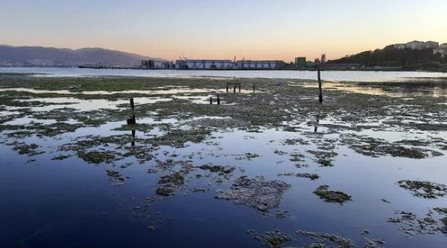Marmara'nın altı üstünden korkunç! Müsilajın deniz altındaki tahribatı görüntülendi