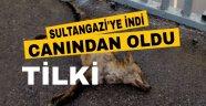 Aç kalan tilki sultangazi ye indi