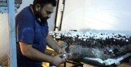 Bolu'da 70 bin TL yatırımla mantar üretimine başlayan vatandaş, 45 günde 20 bin TL kazandı