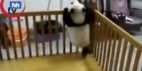 Panda Firarda